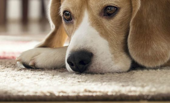Good vacuum cleaners for pet hair