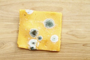 mouldy cheese