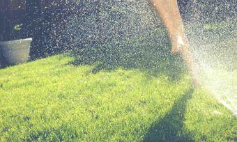 types of lawn in Australia