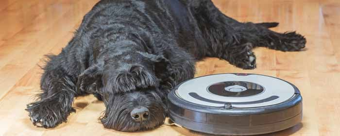 Top Vacuum Cleaners For Pet Hair Models Amp Features