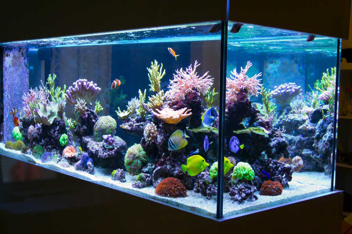Fish Tank Running Costs Explained – Canstar Blue