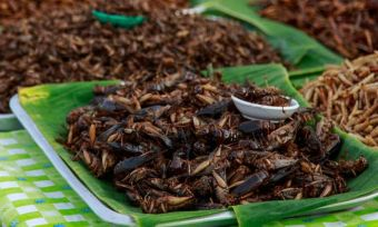Would you eat a protein bar made of crickets?