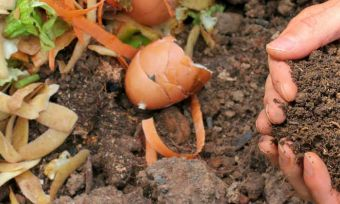 Save your scraps: A guide to composting
