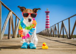 Is sunscreen safe for pets?