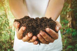 Fertiliser expiry dates