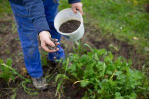 What is Fertiliser