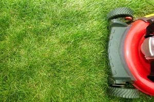 red lawn mower on lawn