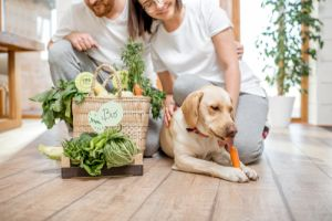 dog and fresh green vegetables at home