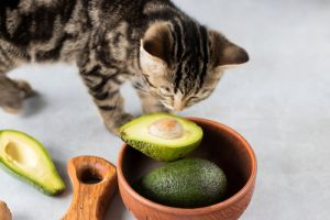 Kitten eat ripe avocado
