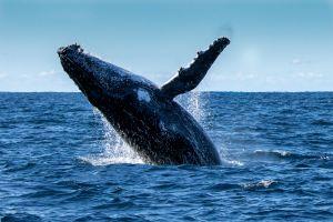 Logan's Beach whale