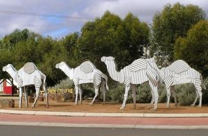 Tin Camels