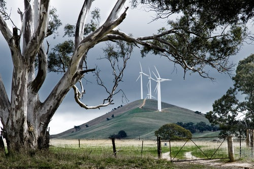 Wind turbines on hill with gum trees in foreground