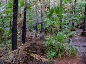 Zebedee Thermal Springs travel Australia