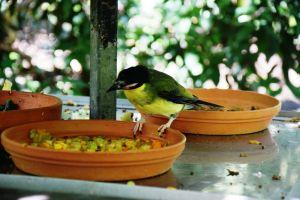 Port Douglas Wildlife Habitat bird