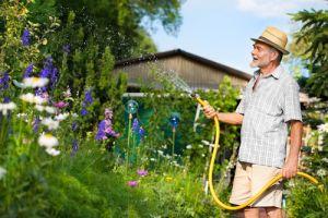 Elderly man hosing garden with water