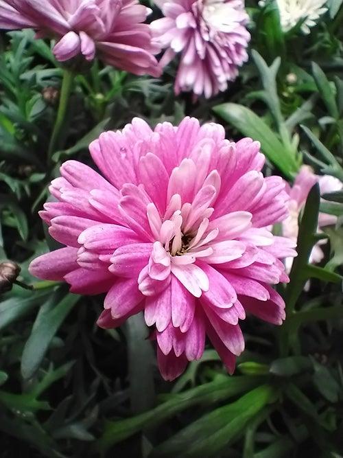 Pink flower macro photo taken on Nokia 5.3