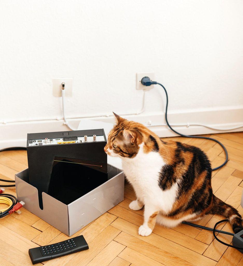 Unboxed modem and pet cat