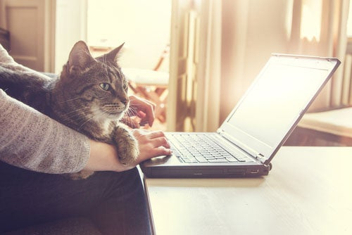 Notebook user on internet with cat