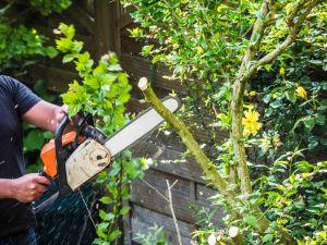 Using chainsaw in garden