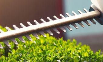 Hedge trimmer trimming hedges