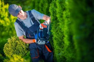 Man using hedge trimmer to shape hedges
