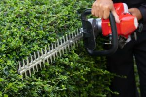 Man with hedge trimmer trimming a gardenhedge