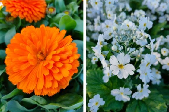 Closeup pictures of orange and white flowers