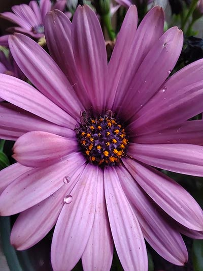 Macro photo of purple flower