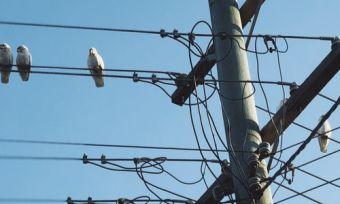 Bird on powerlines