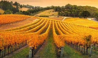 vineyards south australia-min (1)