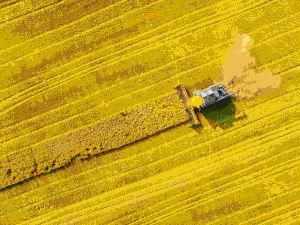 Harvester collection crops for bioenergy production