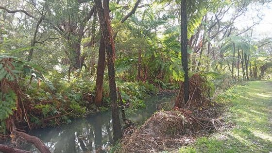 Photo of forest with small creek