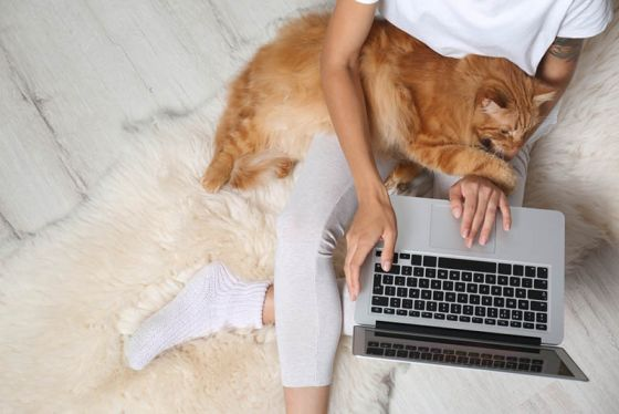 Woman using laptop with ginger cat on lap
