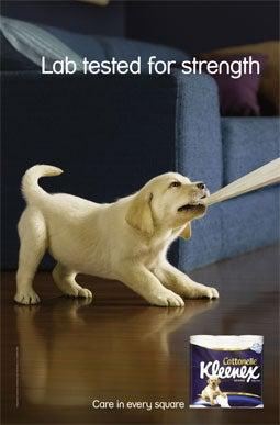 kleenex puppy 2