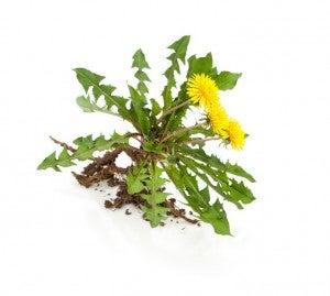 weeds (1)
